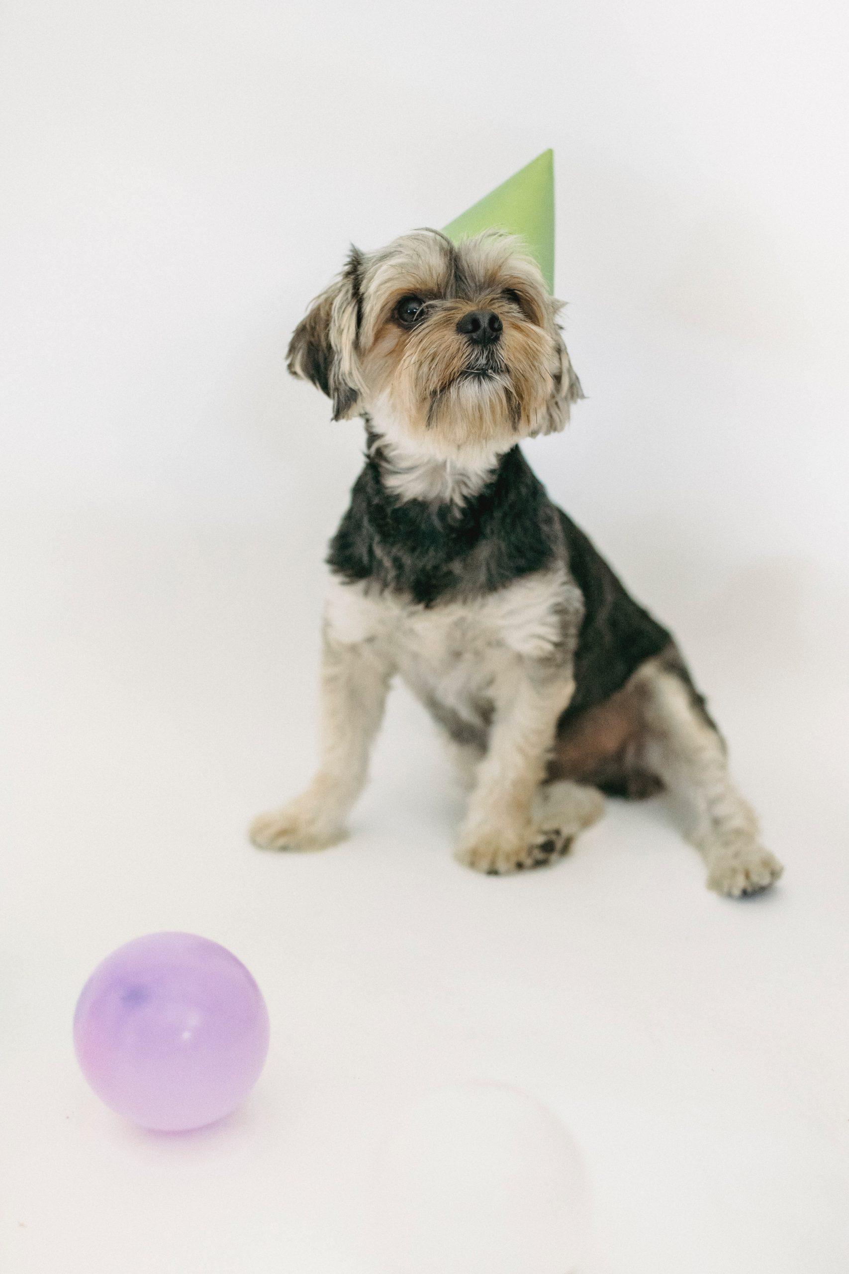 Neujahrsvorsätze für Hundebesitzer!